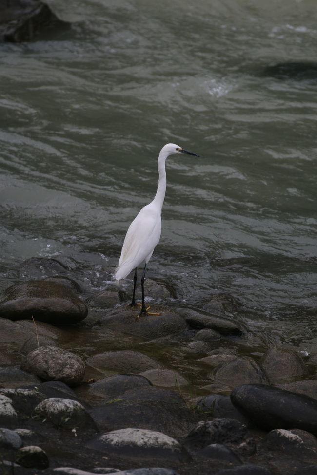 Enjoying Life River Hi! 都江堰 Looking