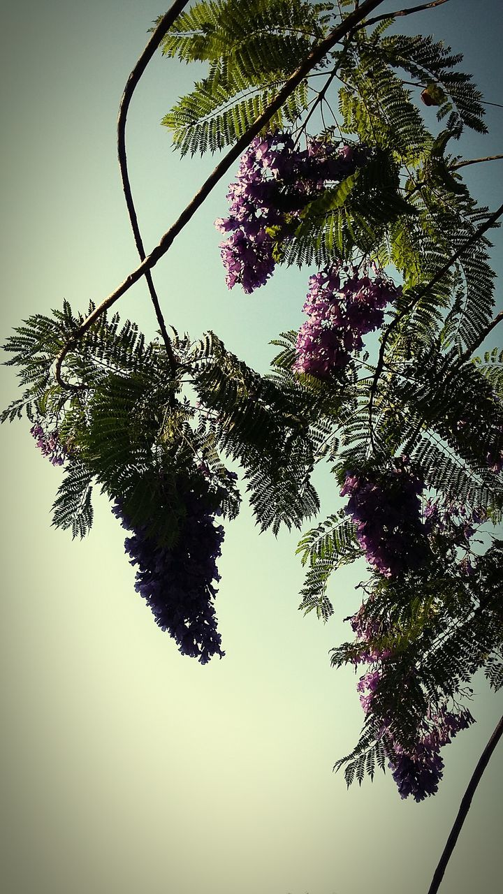 tree, growth, nature, beauty in nature, low angle view, branch, no people, sky, outdoors, day, tranquility, green color, plant, leaf, clear sky, freshness, close-up, flower, fragility