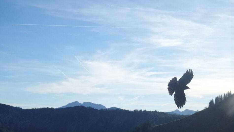 No People Beauty In Nature Mountain Range Idyllic Landscape Bird Flying Away blue sky Outdoors Wallberggipfel