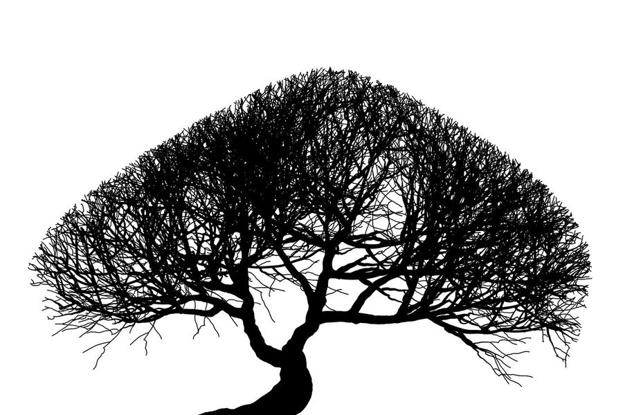 black silhouette of tree on white background. Good for graphic resources. Branches Art Bare Tree Beauty Beauty In Nature Blackandwhite Branch Design Lone Nature Silhouette Tree White Background