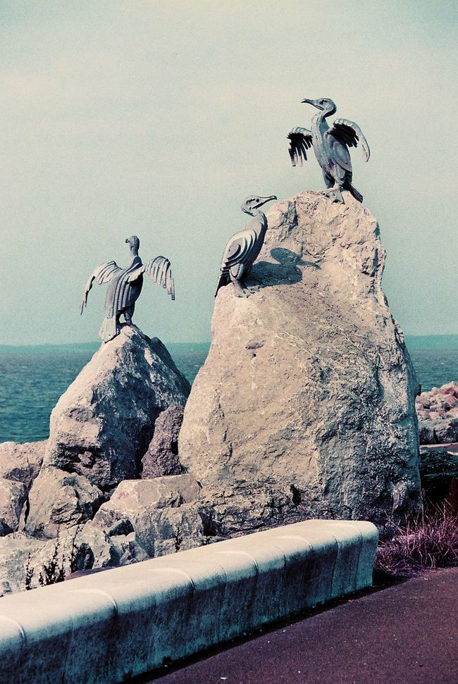 35mm Birds Cormorant  Film Gulls Morcombe Bay Purple Sea Statue Unedited Xpro