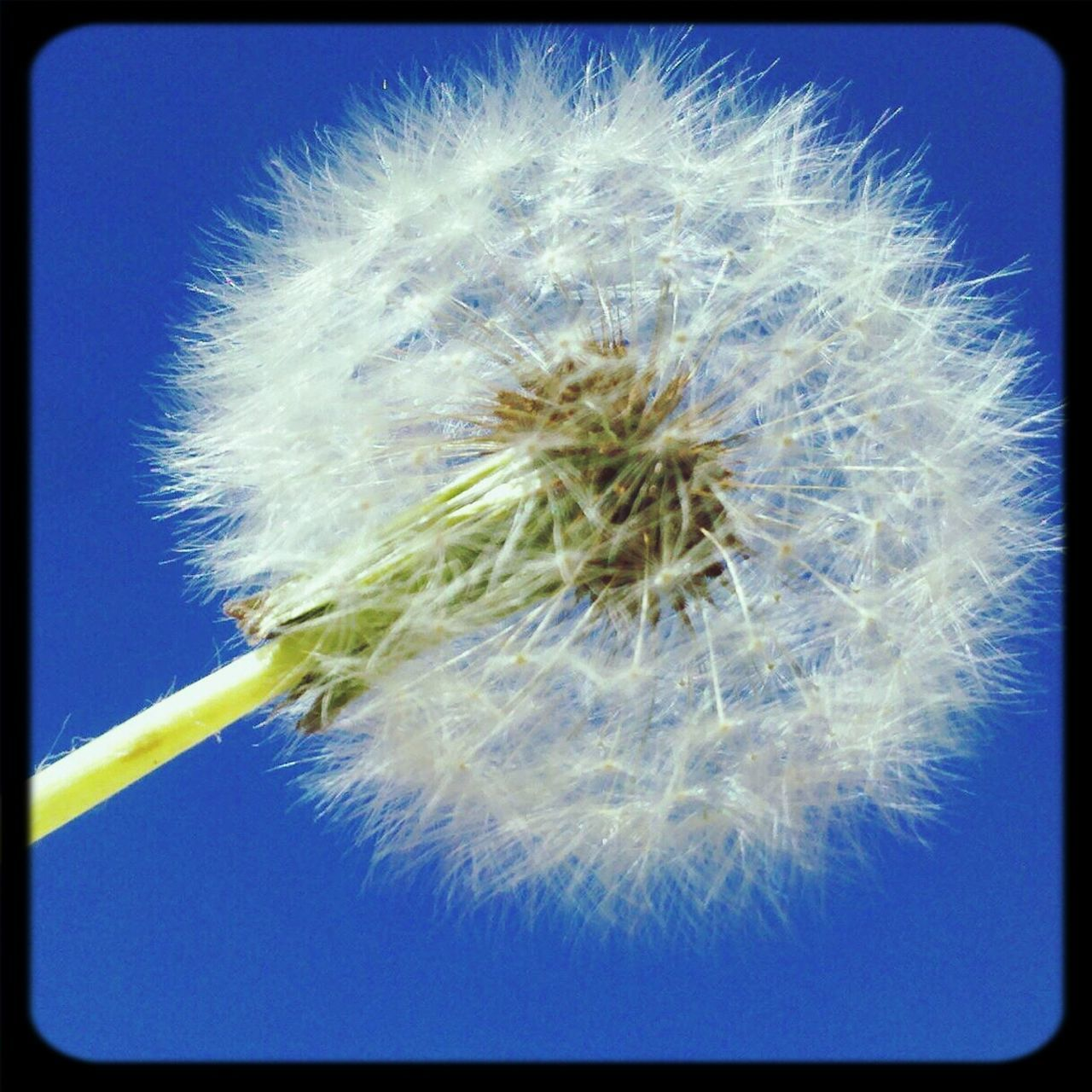dandelion, flower, growth, nature, close-up, fragility, day, beauty in nature, no people, plant, flower head, outdoors, freshness, sky