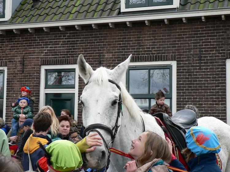 Childhood Holland Horse Paard