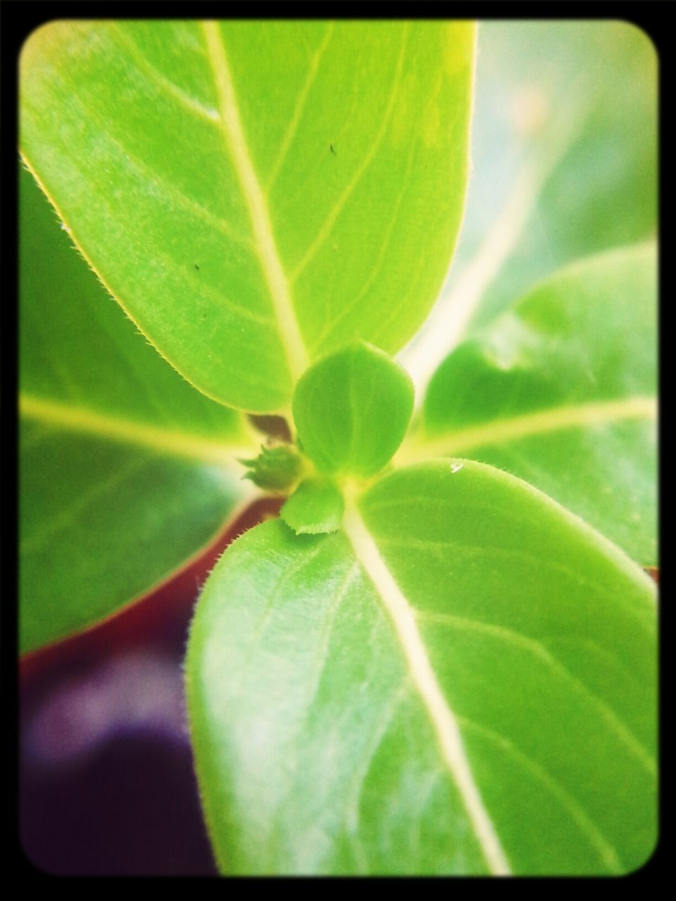 Close Up of Fresh Leaves