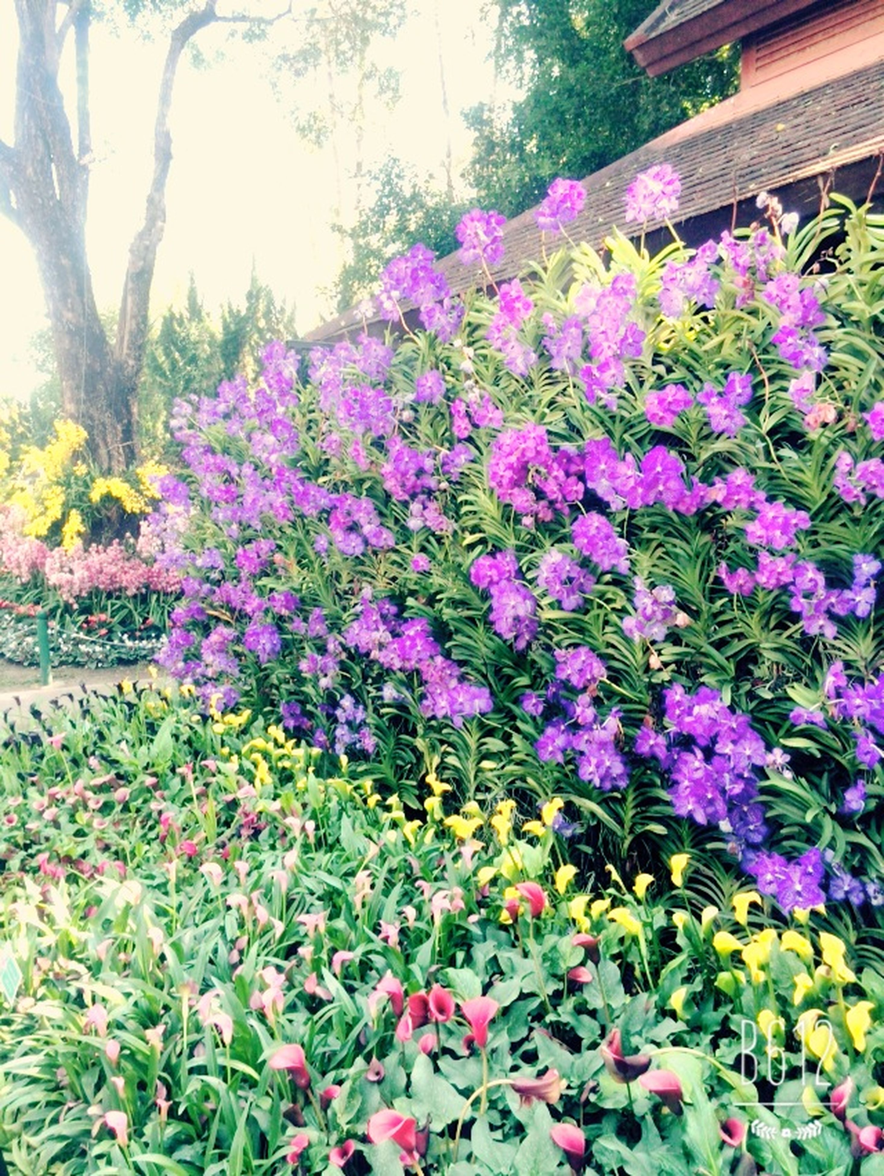 flower, freshness, growth, fragility, beauty in nature, plant, blooming, nature, pink color, petal, in bloom, purple, leaf, abundance, blossom, park - man made space, flower head, day, outdoors, springtime