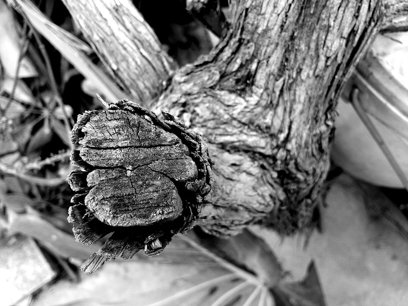 Nature Blackandwhite Photography Check This Out
