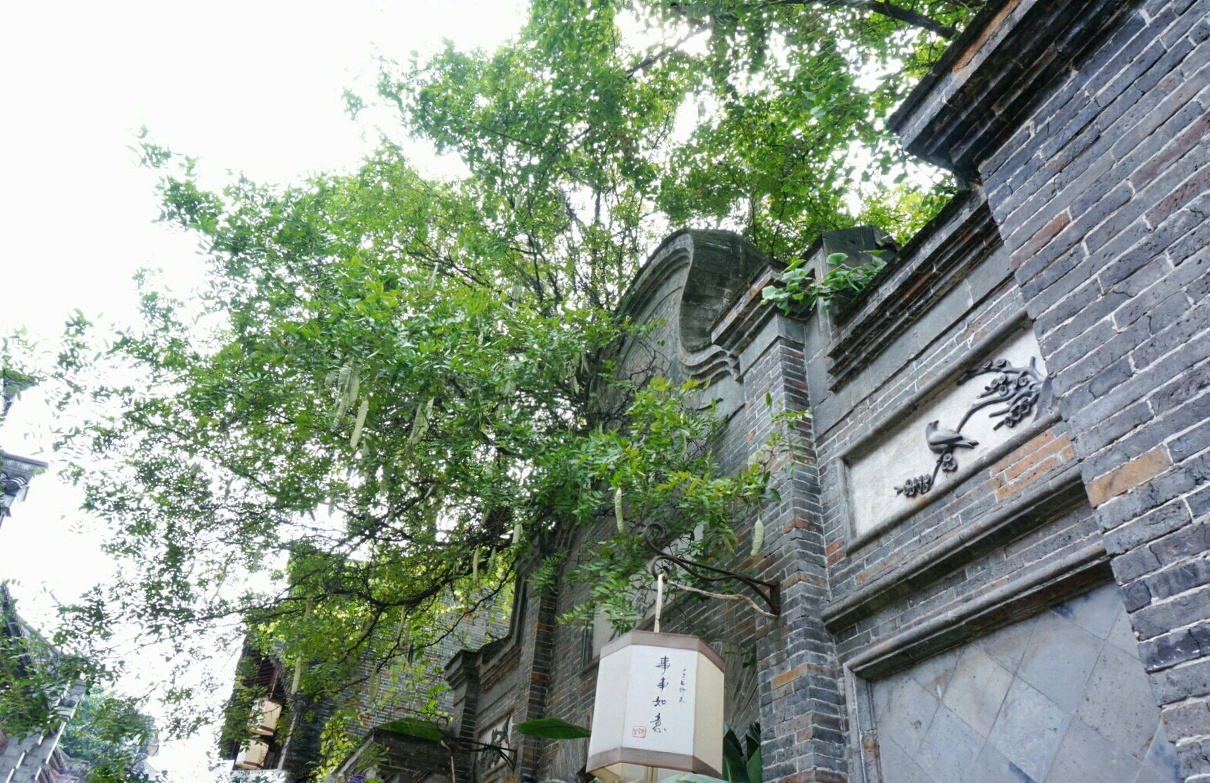 architecture, low angle view, building exterior, built structure, tree, text, communication, western script, growth, building, day, sky, outdoors, green color, non-western script, no people, old, branch, wall - building feature, window