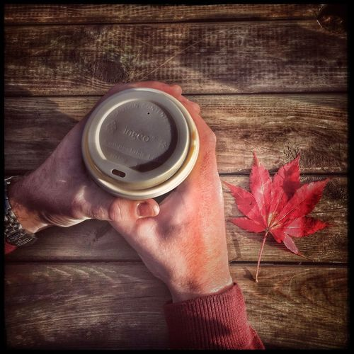 Warming cold hands on a warming cup of coffee on a brisk Autumn day Human Hand Holding Human Body Part One Person Real People Lifestyles Food And Drink Refreshment Close-up Indoors  Freshness Men Day People Warming Autumn Coffees Coffee Relaxing Autumn Red Leaf Maple