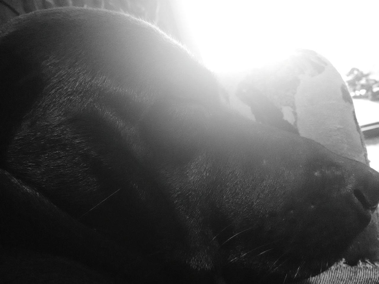 Close-up EyeEmNewHere No People Carnival Crowds And Details Sunlight Freshness Animal Themes Dog Dogs Dog Love Dogslife Dog Photography Dog Lover Doglovers Dogs Of EyeEm Dog Life Dog Of The Day Doggy Love Dog Sleeping