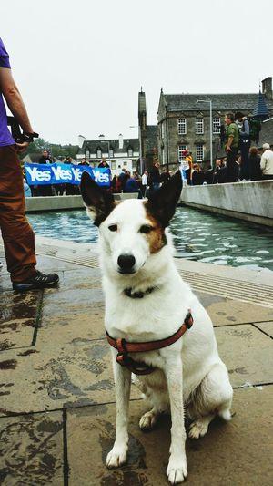 Protest Dog Life Scotland Heartbroken
