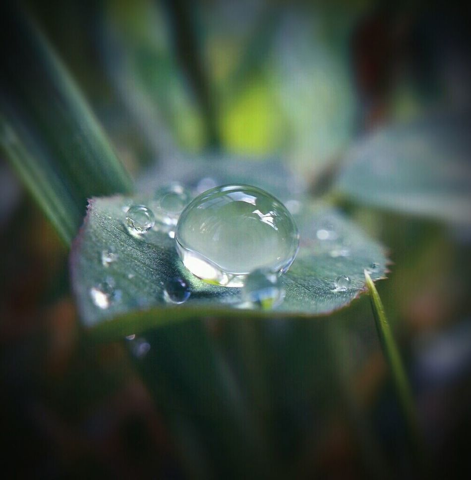 Galaxy note 5 with macro lens Macro Macro Photography Nature Beautiful Nature Beautiful Photography Taking Photos Android Androidography Nature_collection Naturelovers Water Dew Drops Dew Condensation Dew Morning