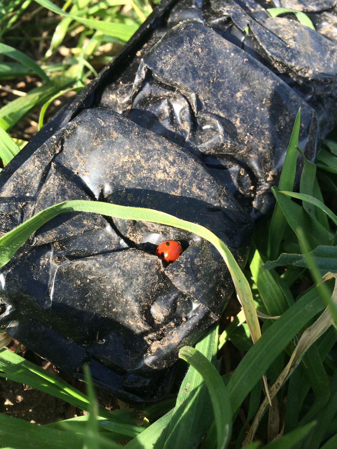 first ladybird of the year NatureYouGuys