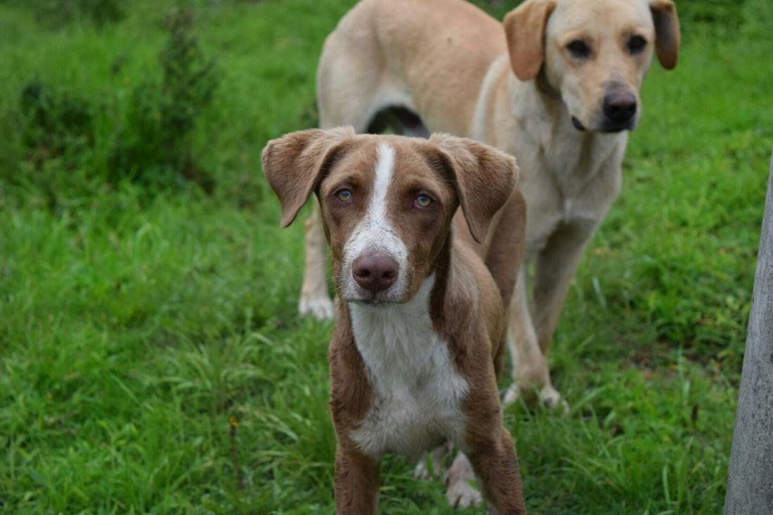 Dog Ecuador Tungurahua