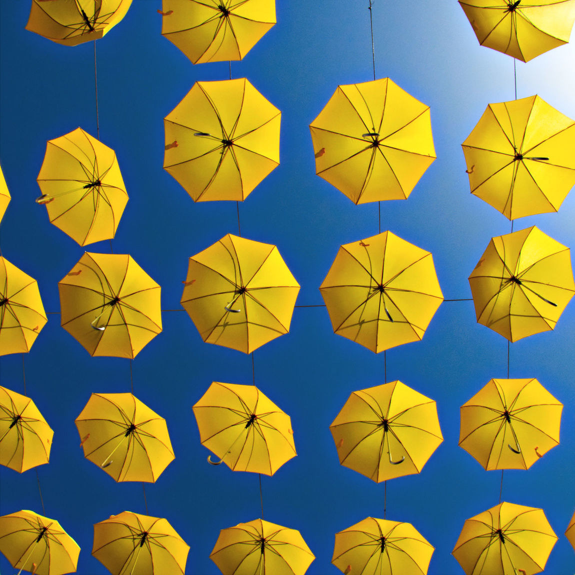 Art Art Exhibition Blue Sky Bottom Up Color Contrast Colorful Contrasting Colors Creativity Daylight Decoration Dramatic Angles Hanging Hanging Umbrellas Large Group Of Objects Light Low Angle View Outdoors Sky Vibrant Colors Yellow Yellow And Blue Beautifully Organized