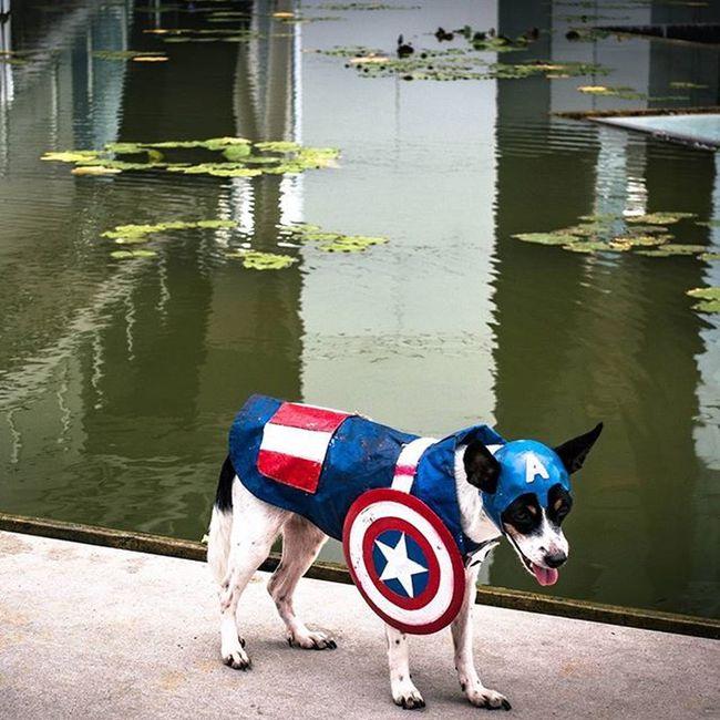Dog in TeamCap uniform Mbs Marinabaysands Sunday Dog Sonyrx100iv Lightroom Dogsofinstagram Singapore
