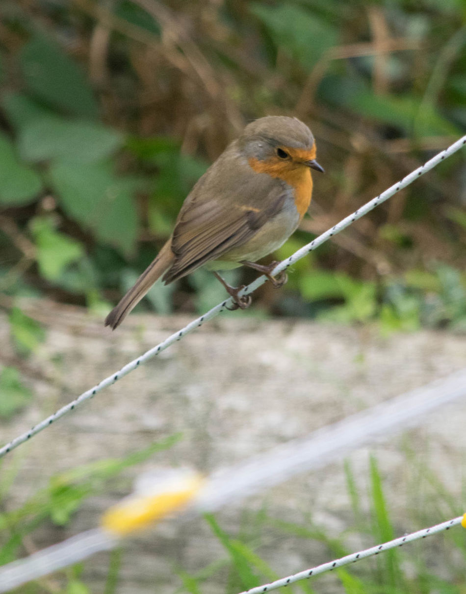 Animals In The Wild Beauty In Nature Bird Branch Focus On Foreground Nature Perching Wildlife