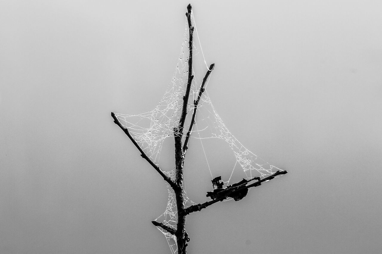 spider web, nature, close-up, day, outdoors, no people, web, hanging, fragility, beauty in nature, animal themes