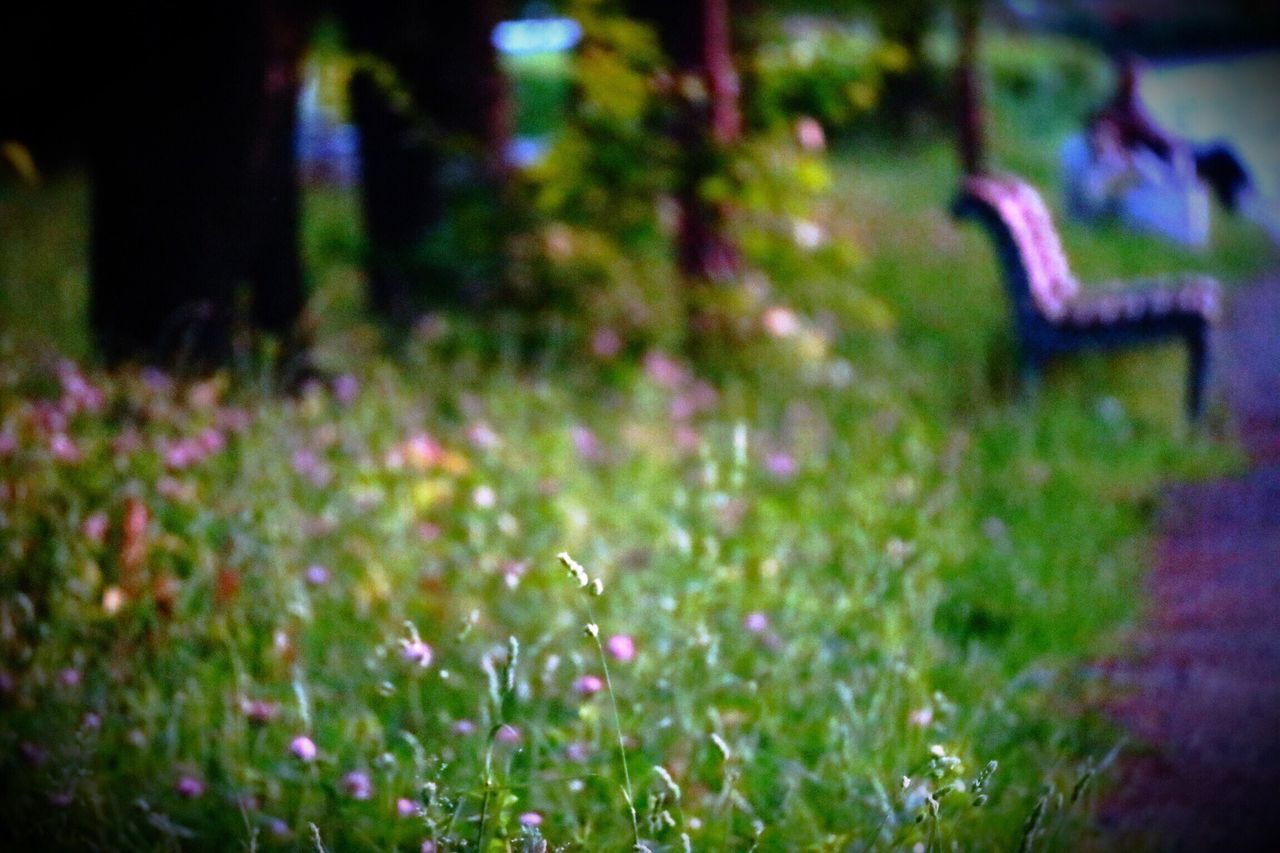 Sunset Bench Nature No People Selective Focus Grass Growth Outdoors Plant Focus On Foreground Beauty In Nature Flower Tranquility Day Close-up Freshness EyeEmNewHere