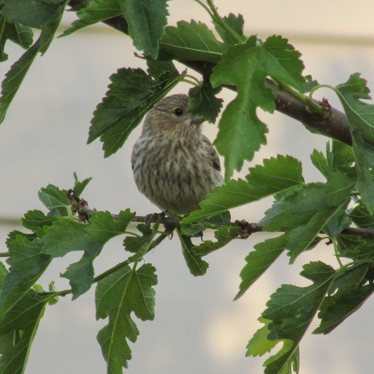 Bird Series One Animal Animals In The Wild Animal Wildlife Bird Perching Tree Branch Leaf Green Color Growth Plant Outdoors Close-up Animal Themes Nature Beauty In Nature Michigan United States