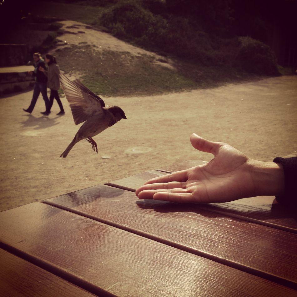 Feeding a bird from my hand