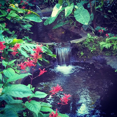 At the Sunken Gardens in St. Pete Florida! I took this shot a couple years ago when I still lived in Florida, it's a beautiful place! Sunken Gardens St Pete Florida Tropical Gardens Mini Waterfall Tropical Plants Fresh EyeEm Cell Phone Photography