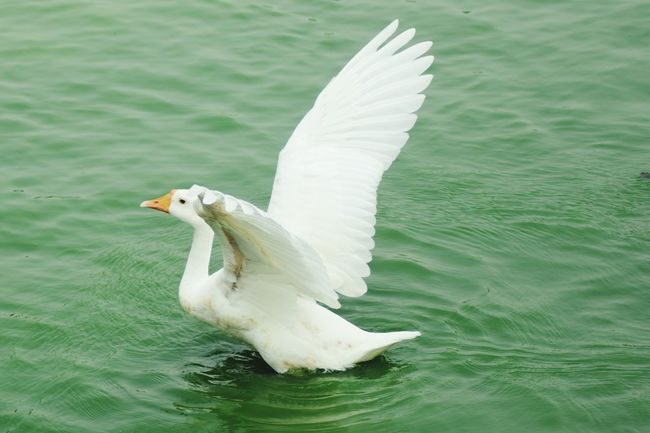 Bird Photography Hauzkhasvillage First Eyeem Photo