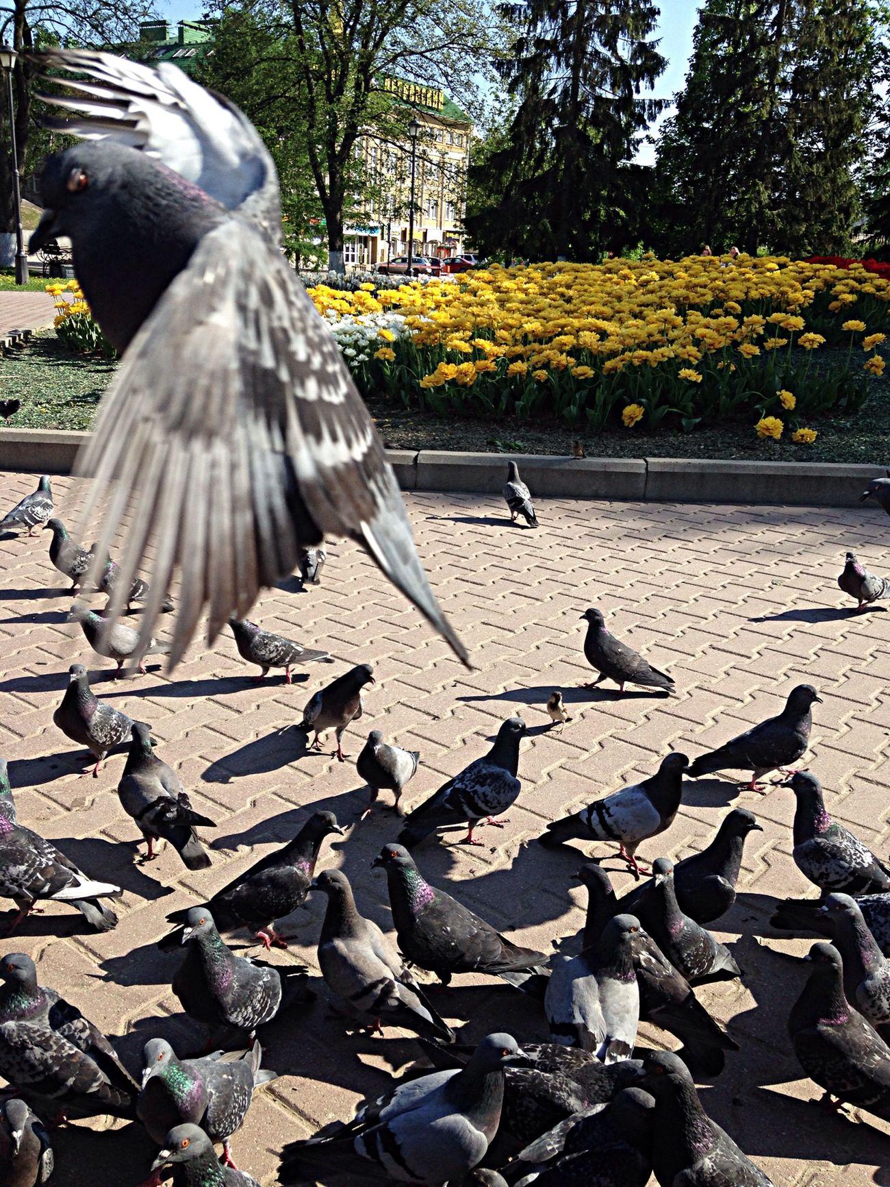 За секунду до ... птица Air Полет город #city #bird