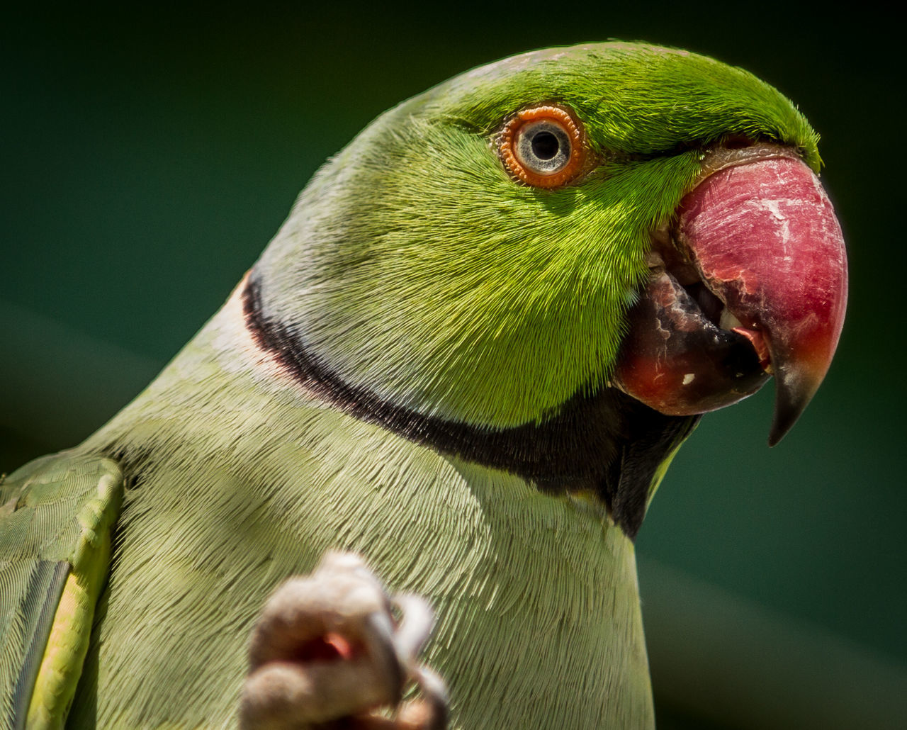 Animal Themes Animal Wildlife Animals In The Wild Beak Bird Close-up Day Green Color Nature No People One Animal Outdoors Parrot Perching