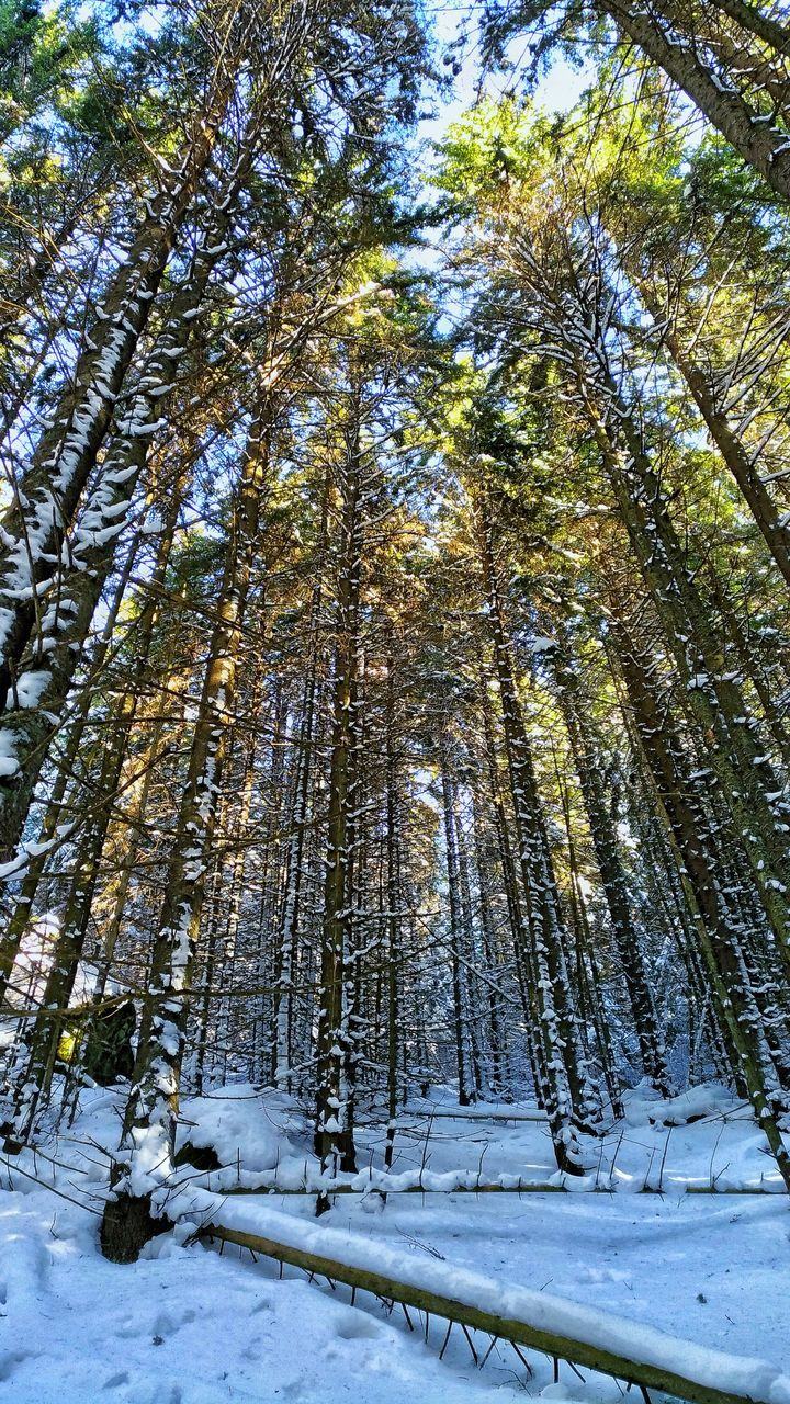 snow, winter, nature, cold temperature, tree, tranquility, beauty in nature, tranquil scene, weather, outdoors, forest, scenics, day, low angle view, growth, no people, landscape, sky