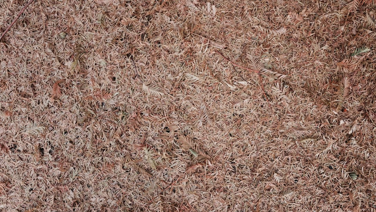 backgrounds, full frame, textured, no people, brown, pattern, day, close-up, nature, outdoors
