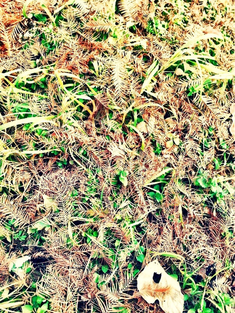 field, high angle view, leaf, day, grass, no people, full frame, nature, outdoors, close-up