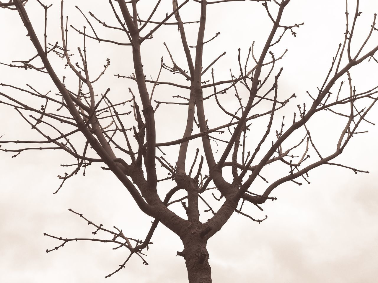 branch, bare tree, tree, low angle view, outdoors, nature, day, beauty in nature, no people, sky, close-up