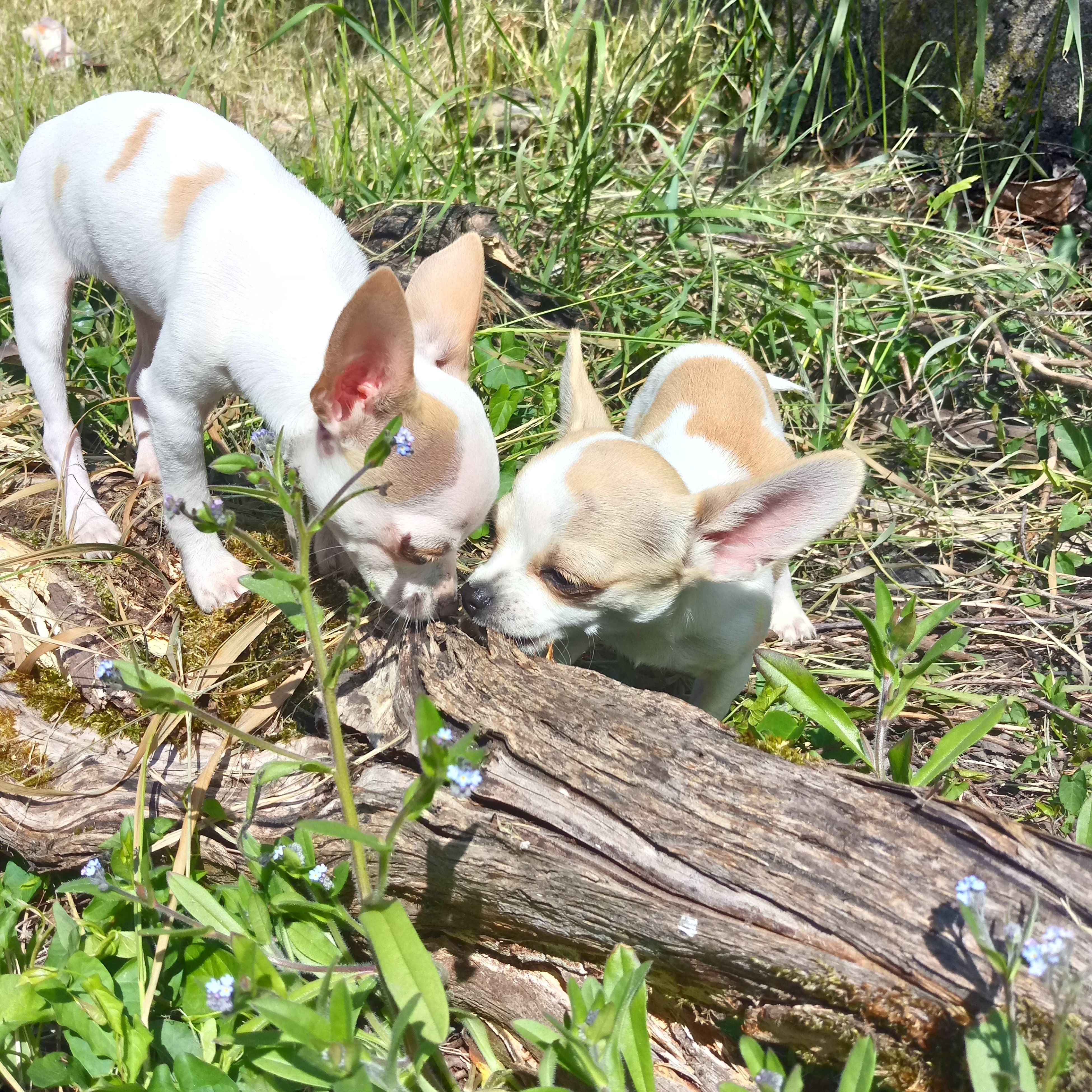 animal themes, domestic animals, pets, high angle view, mammal, dog, grass, day, young animal, no people, togetherness, outdoors, nature