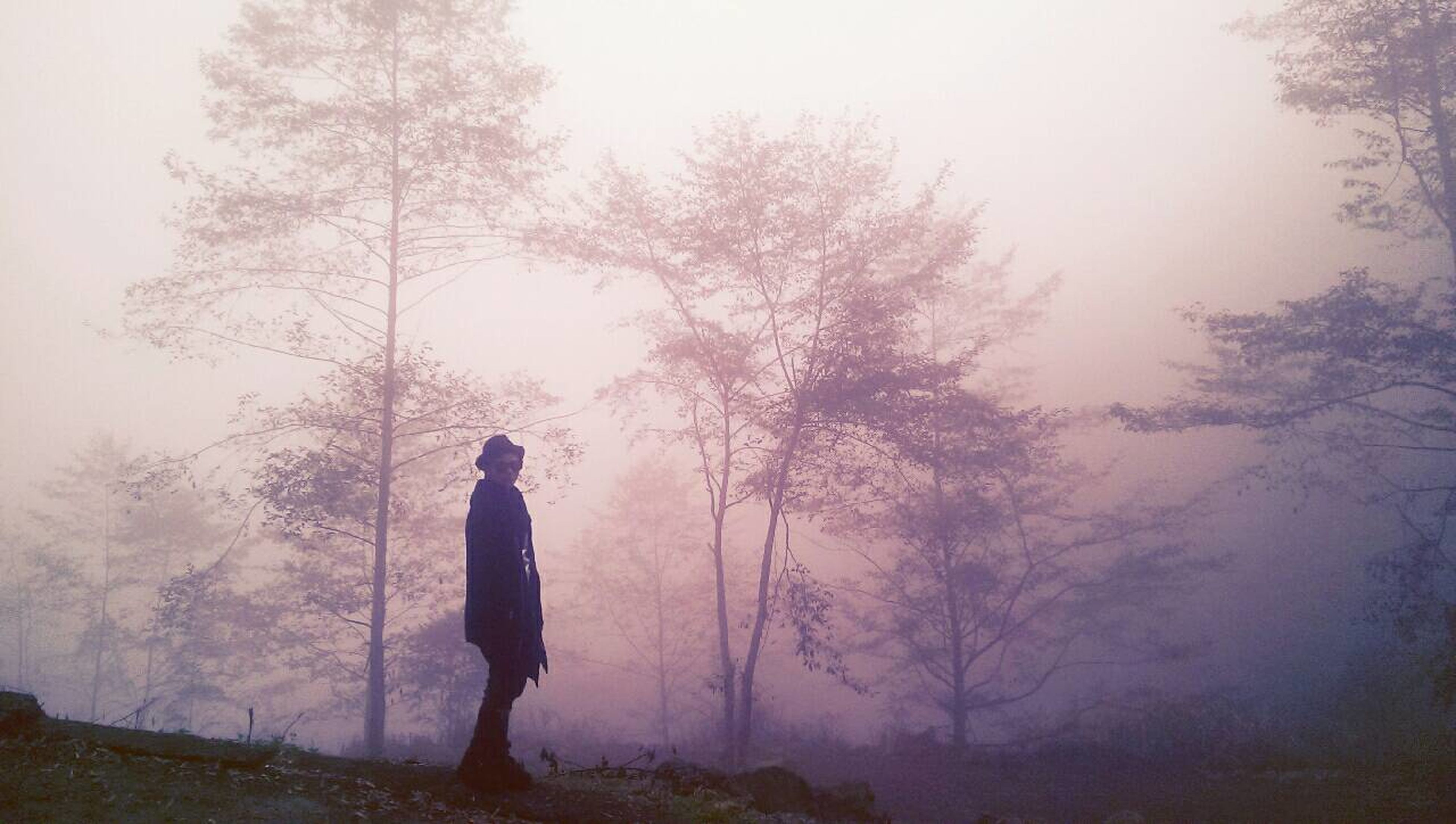 tree, lifestyles, full length, bare tree, silhouette, standing, leisure activity, rear view, men, tranquility, tranquil scene, fog, nature, beauty in nature, landscape, sky, scenics