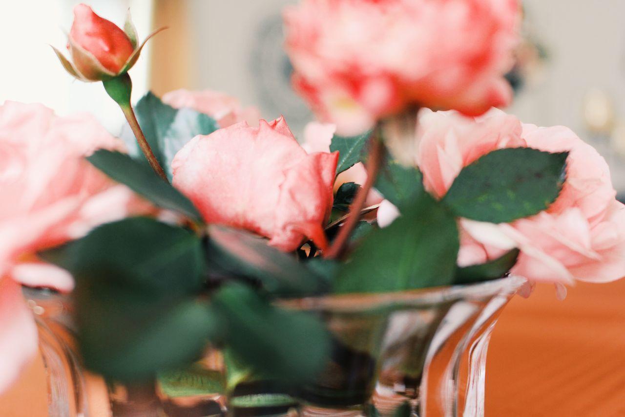 sags in der sprache der blumen florale bilder auf eyeem. Black Bedroom Furniture Sets. Home Design Ideas