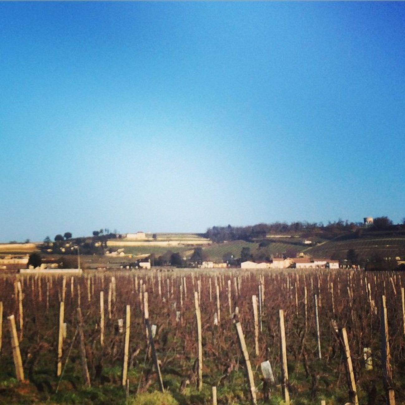 Sunny Future Wine. Pomerol