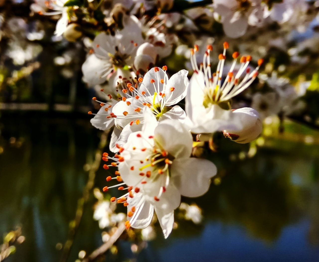 Nature Beauty In Nature Growth Plant Water Close-up Outdoors No People Flower Flower Head Freshness Day