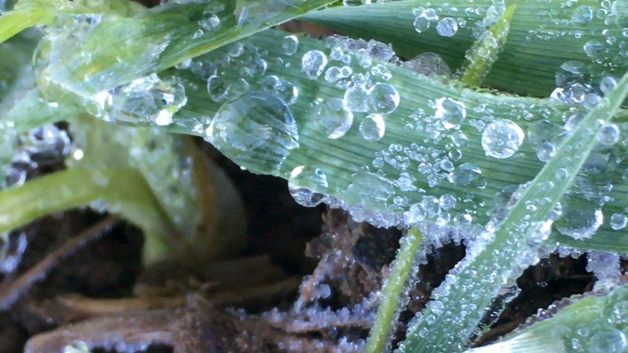 Nature Showcase: December My Best Photo 2015 Wassertropfen Tautropfen Deepfreeze