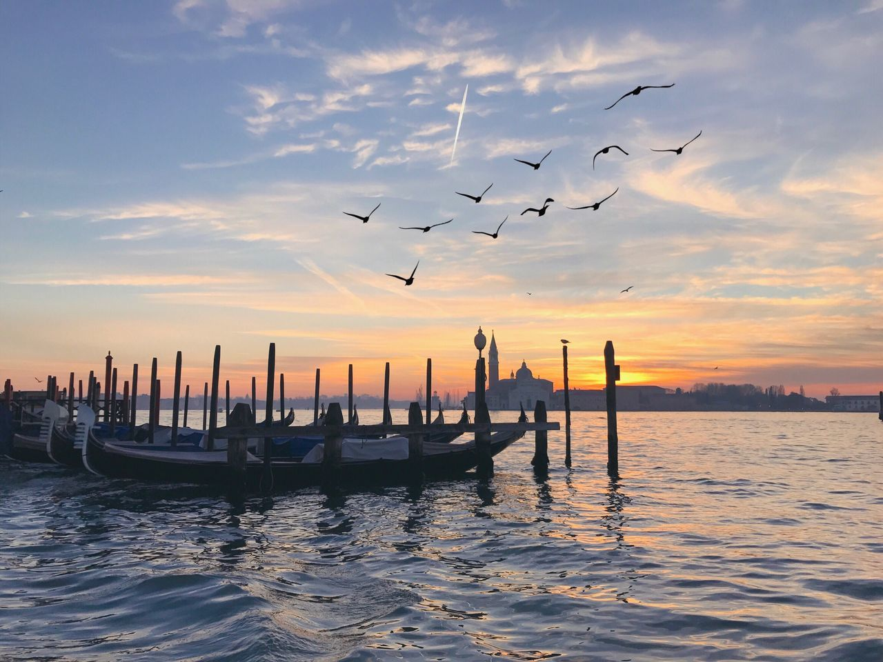 Birds Sunrise Gondola - Traditional Boat Water Venice Cultures Bird Travel Destinations Nautical Vessel Outdoors No People Day Grand Canal Canal