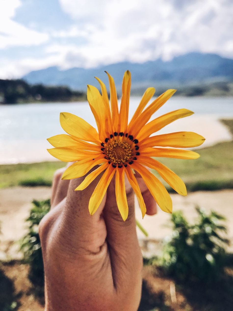Hello Sunshine, hello flower, hello world! Human Hand Flower Nature One Person Focus On Foreground Fragility Close-up Beauty In Nature Freshness Holding Human Body Part Real People Flower Head Outdoors Sky Sunny Holding A Flower Life Is A Beach