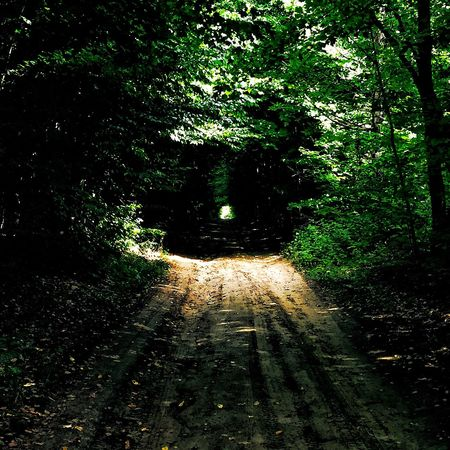 ..towards the light. Summer EyeEm Nature Lover Eye4photography  SimcoeCounty Forest Outdoors Lostinthewoods