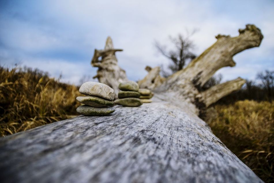 Still life stones on a dead tree Nature No People Sky Winter Tree Close-up Tranquility Outdoors Cold Temperature Snow Day Beauty In Nature Still Life StillLifePhotography Still Art ARTsbyXD Background Texture Textures Pattern Stones Poster Art Backgrounds Poster Wallpaper Design