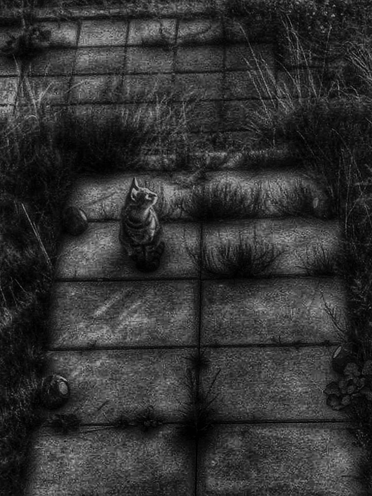 Pussycat Pusspuss Blackandwhite Photography Blackandwhite Garden Animals Animal_collection The Week Of Eyeem This Week On Eyeem