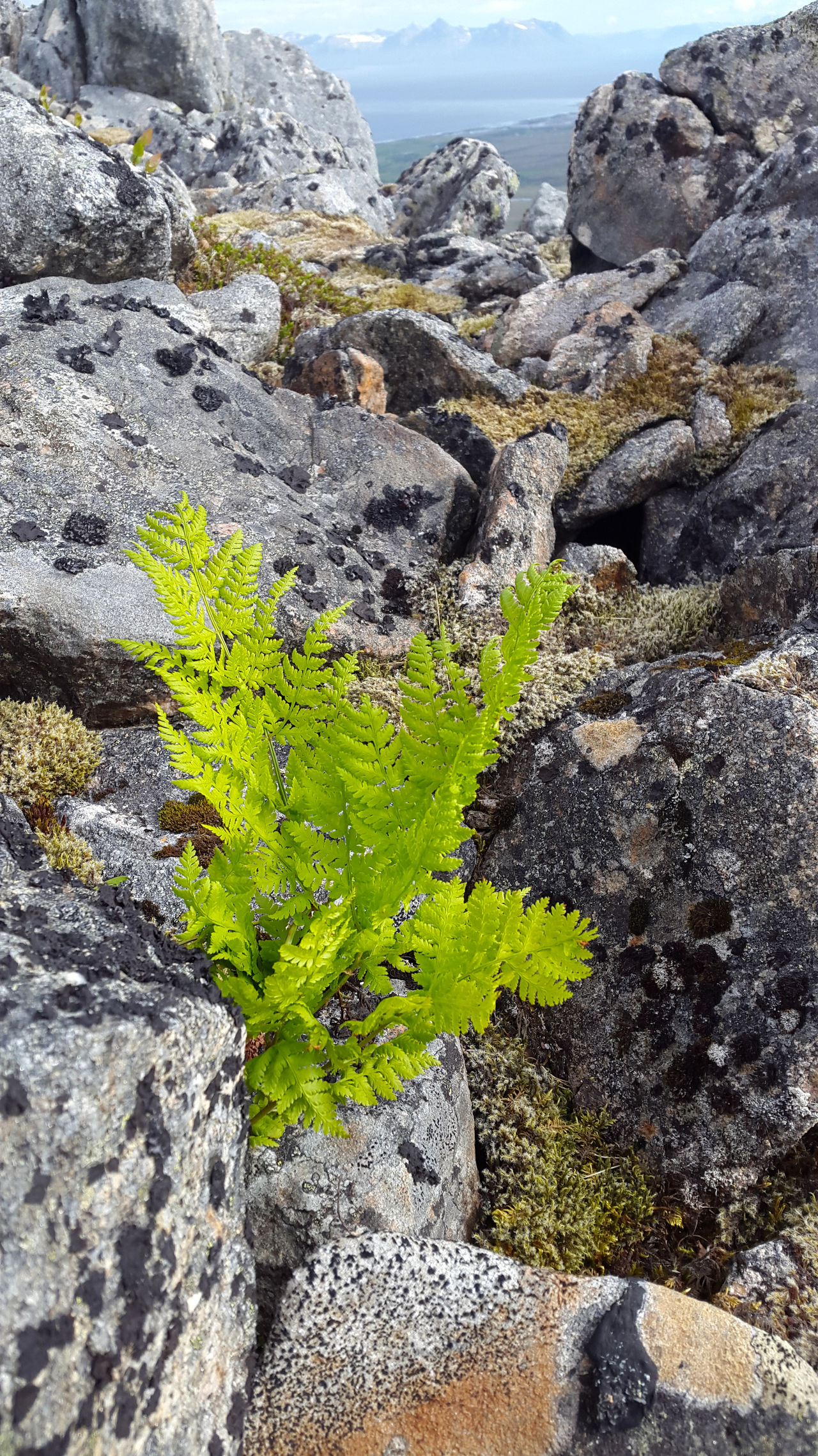 Beauty In Nature Close-up Day Green Color Growth Mountain Nature No People Non-urban Scene Outdoors Rocks Scenics Sea