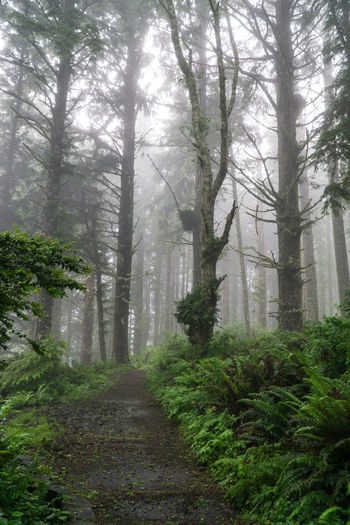 Cape Perpetua trail shrouded in morning fog along Oregon central coast Beauty In Nature Branch Cape Perpetua Day Fog Forest Landscape Nature No People Oregon Oregon Coast Oregonexplored Outdoors Plant Scenics Sky Solitude Trail Tranquil Scene Tranquility Tree