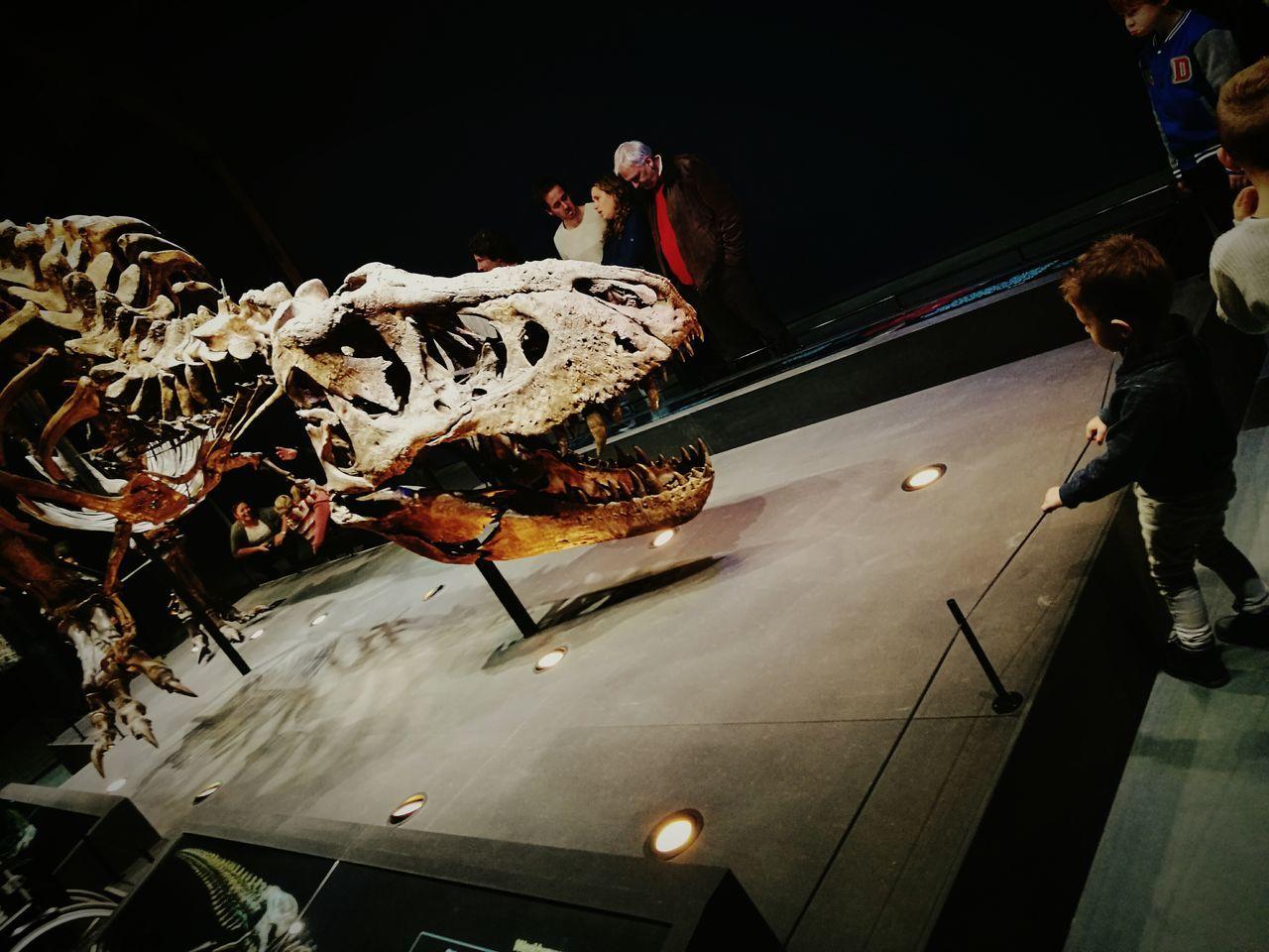 When old meets new Dinasaur TRex  Bones Museum Littel Boy , Museum Indoors  Full Length Adult People Dreaming Big...