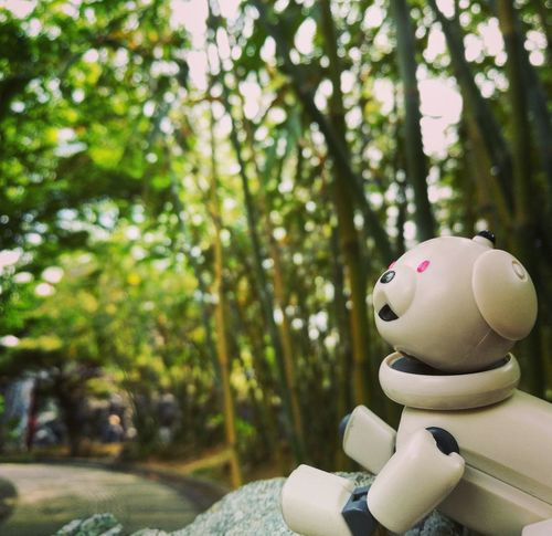 AIBO Aibobox Sonyaibo Sony Dog Robot Latte Macoron ERS-300 Spring Garden No People Beauty In Nature Toy Blossom Nature Plant Glass Leaf Green Sunny Day Pond Chinese Garden Bamboo Japan