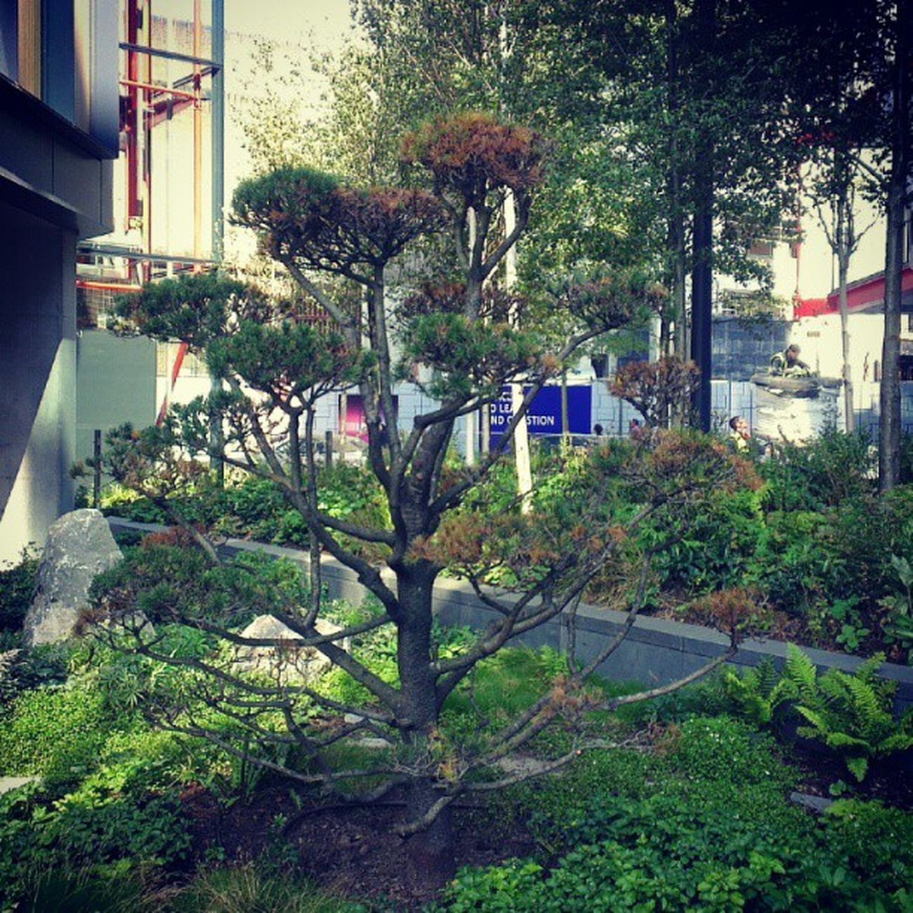 Neo Bankside Garden. Neobankside Southbank Southwark  London xpro