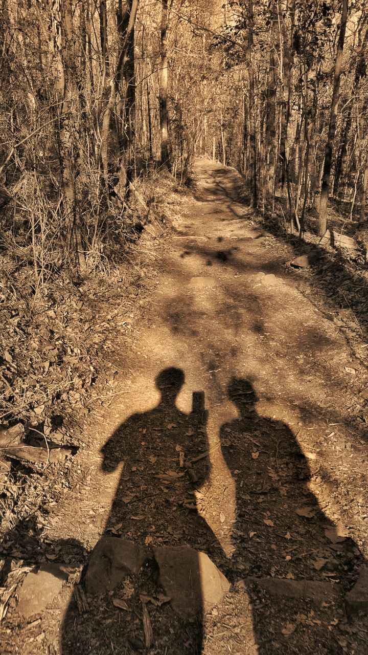 shadow, focus on shadow, forest, real people, sunlight, the way forward, nature, two people, outdoors, men, tree, day, mammal, people