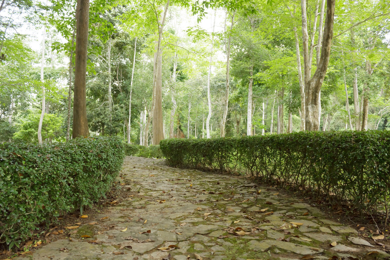 Beauty In Nature Day Forest Forestwalk Green Color Growth Natural Natural Beauty Nature Nature Nature Photography Naturelovers Naturephotography No People Outdoors Path Path In Nature Paths Pathway Pathway In The Forest Pathways Scenics Tranquility Tree Way